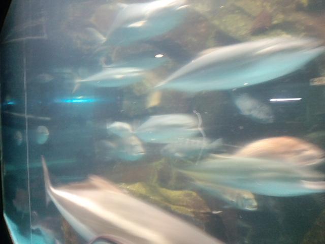 水族館は楽しい